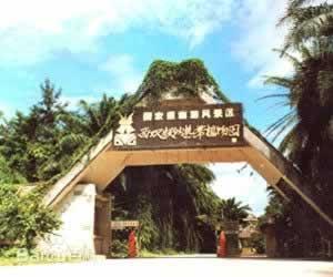 西双版纳勐仑植物园