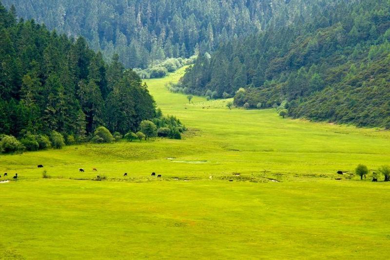 香格里拉小中甸牧场
