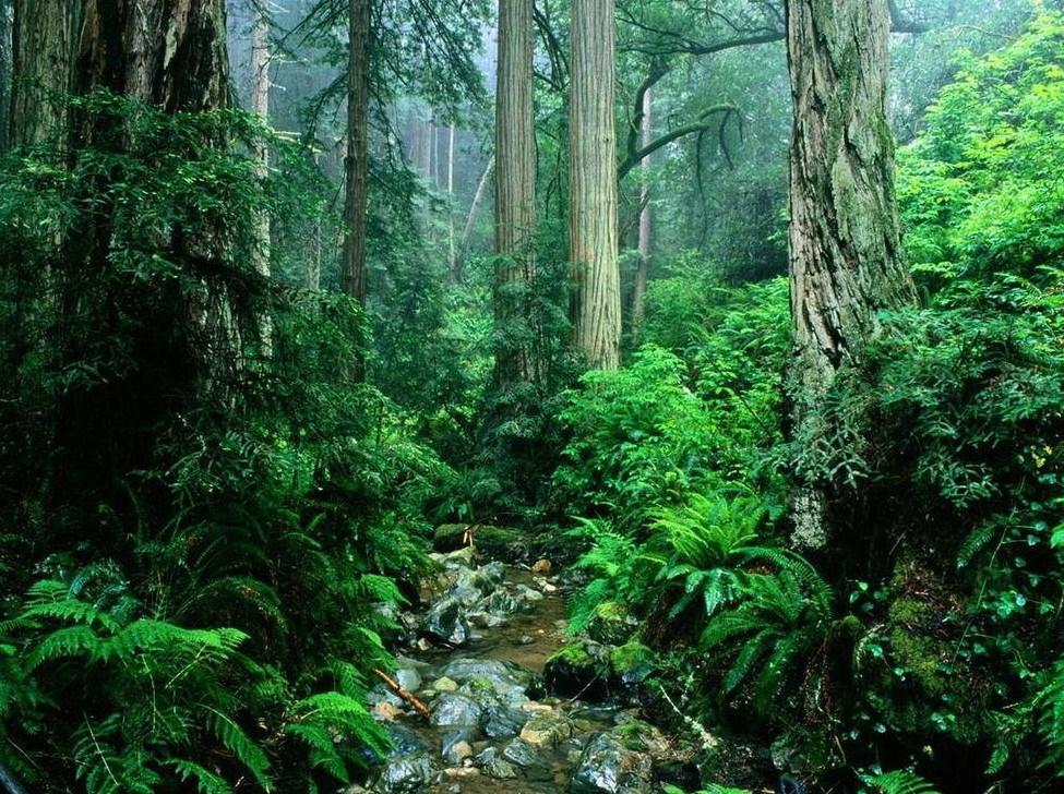 原始森林公园