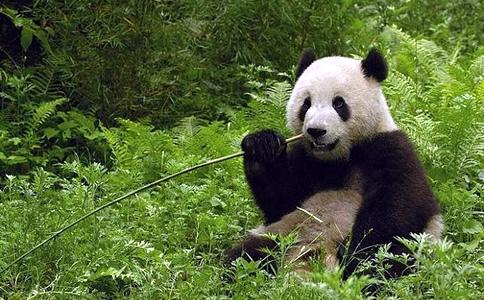 都江堰大熊猫基地