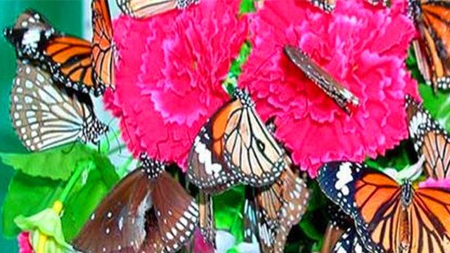 蝴蝶泉公园